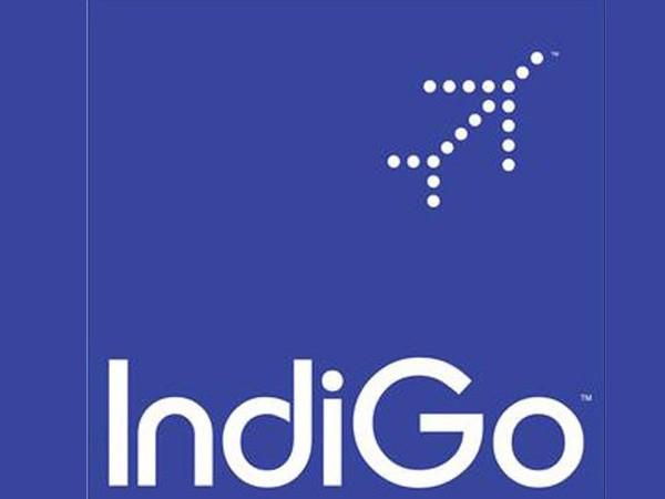 Indigo_Mar13